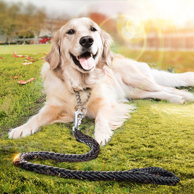 hogy a golden retriever kutyák, hogy a golden retri